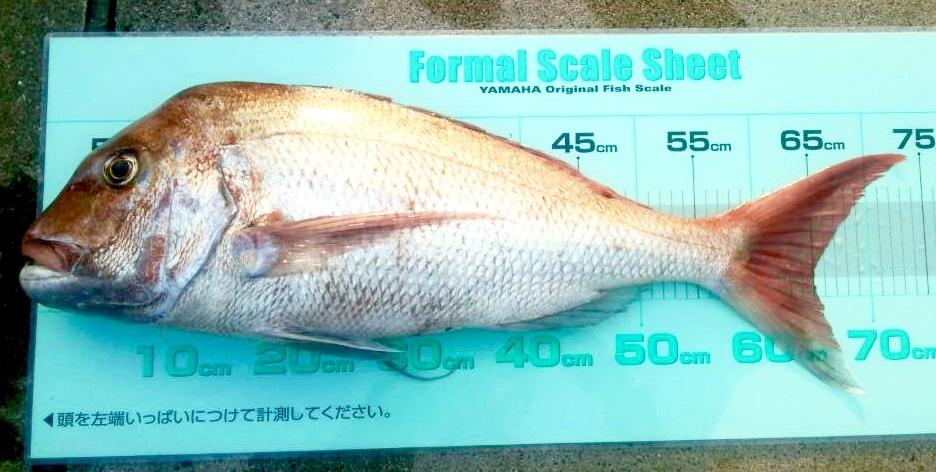釣り大会後の釣果!_a0132631_18161046.jpg