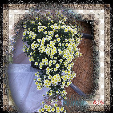 b0133752_22313451.jpg