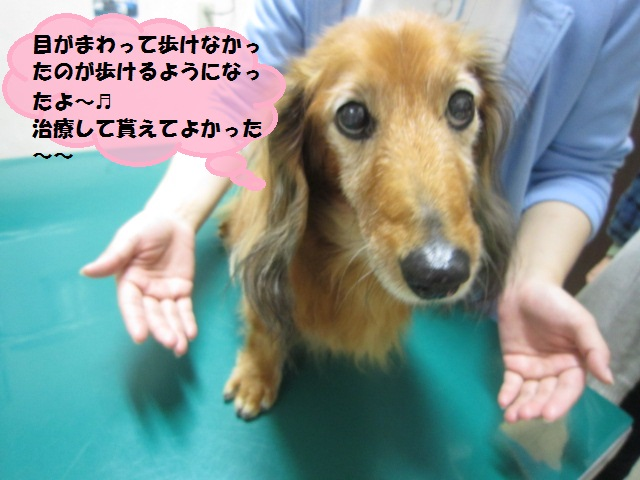 【病院に行ったが治療をしてもらえずに、、、】_b0059154_1502533.jpg