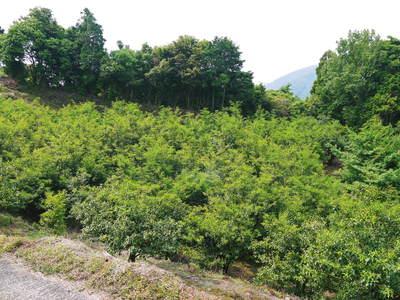 旬援隊のオリジナルブランド商品と、『原木しいたけ』の2年後の収穫へ向け伐採作業_a0254656_14362935.jpg