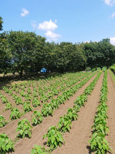 旬援隊のオリジナルブランド商品と、『原木しいたけ』の2年後の収穫へ向け伐採作業_a0254656_14455984.jpg