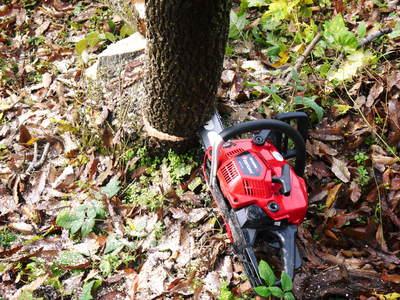 旬援隊のオリジナルブランド商品と、『原木しいたけ』の2年後の収穫へ向け伐採作業_a0254656_16372015.jpg