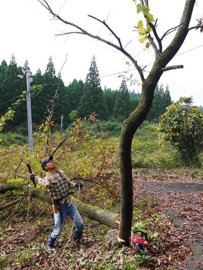 旬援隊のオリジナルブランド商品と、『原木しいたけ』の2年後の収穫へ向け伐採作業_a0254656_16421674.jpg