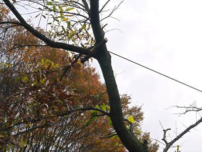 旬援隊のオリジナルブランド商品と、『原木しいたけ』の2年後の収穫へ向け伐採作業_a0254656_16541421.jpg