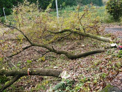 旬援隊のオリジナルブランド商品と、『原木しいたけ』の2年後の収穫へ向け伐採作業_a0254656_16591556.jpg