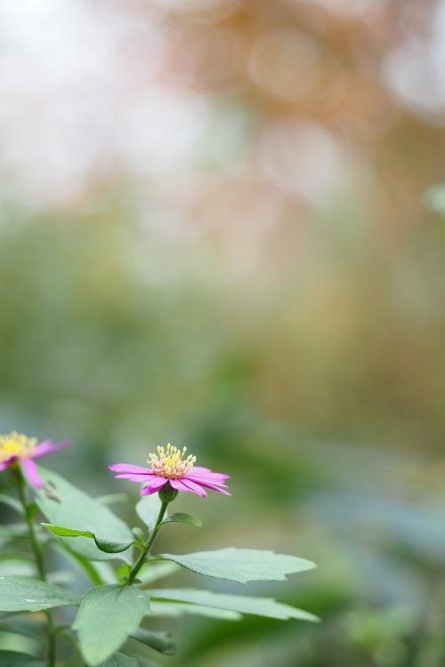 秋色の庭_a0292060_17055207.jpg