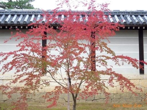 文化財建造物の保存修理 仁和寺観音堂 2016年11月6日_a0164068_14272907.jpg