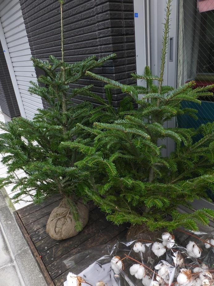 オークリーフ(クリスマスの準備)_f0049672_17204187.jpg
