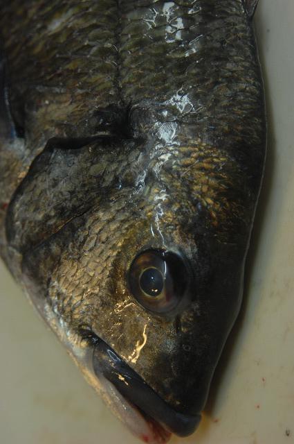 魚は季節を知っている_d0268290_9422711.jpg