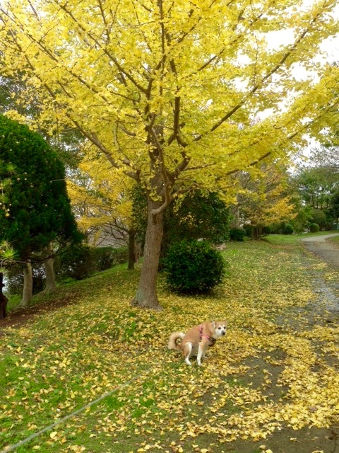 秋ですね…♪_f0232994_126437.jpg