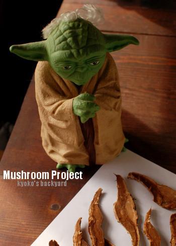 オットのマッシュルーム・プロジェクト_b0253205_05521159.jpg