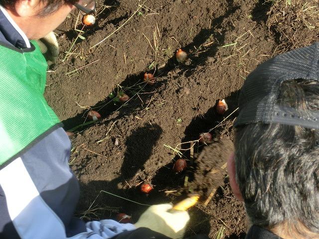 滝川の土手150mにヒガンバナの球根2,000球をジヤトコの皆さんと植付け 「そうだ!沼川プロジェクト」_f0141310_7294345.jpg