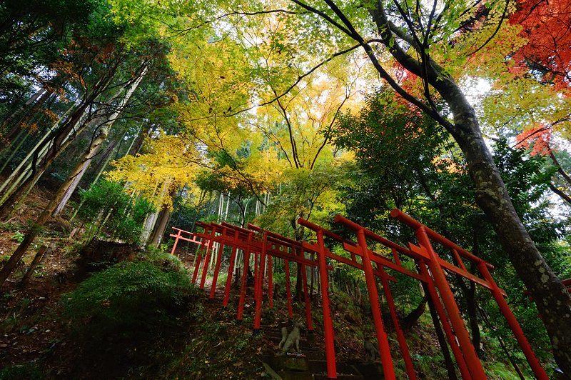 2016京都の紅葉@とある神社_f0032011_19461639.jpg