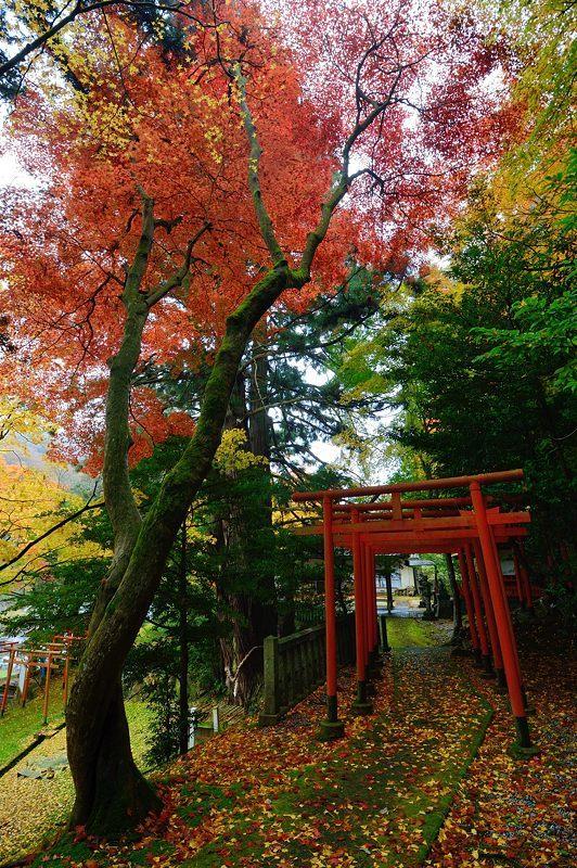 2016京都の紅葉@とある神社_f0032011_19461710.jpg