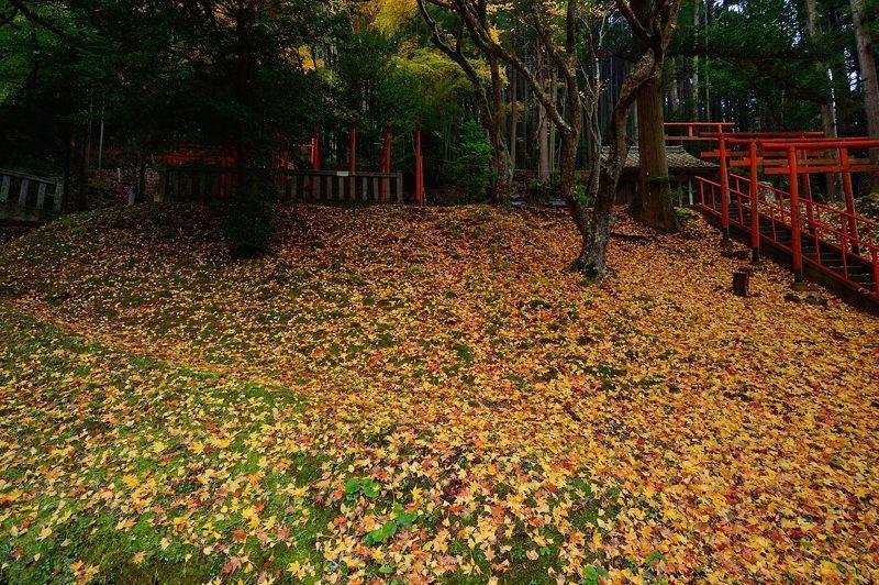 2016京都の紅葉@とある神社_f0032011_19461861.jpg