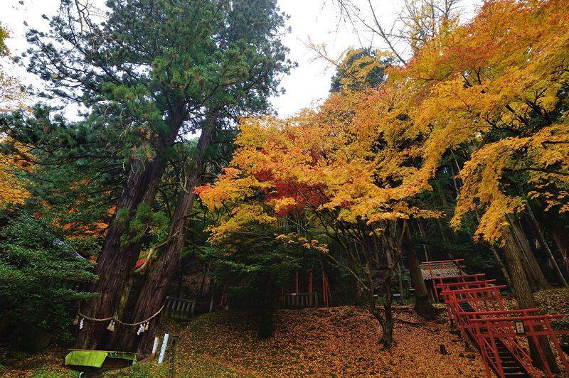 2016京都の紅葉@とある神社_f0032011_19461960.jpg