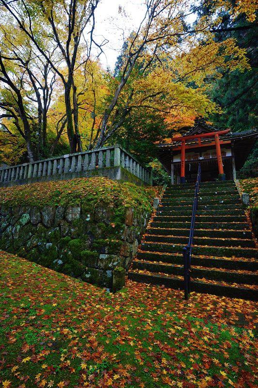 2016京都の紅葉@とある神社_f0032011_19462036.jpg