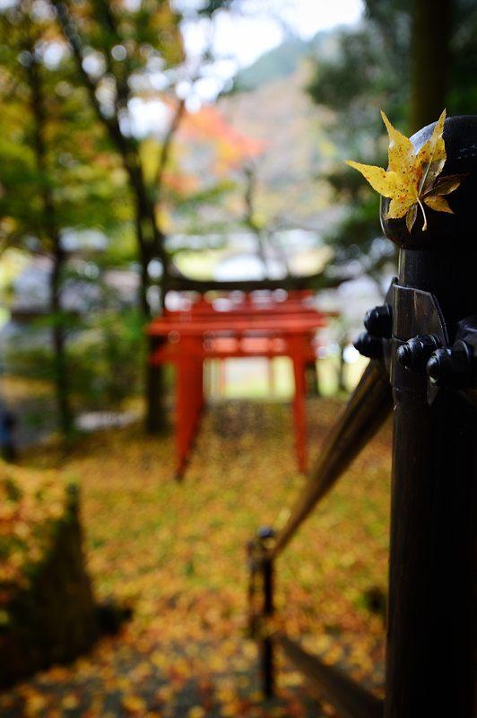 2016京都の紅葉@とある神社_f0032011_19462077.jpg