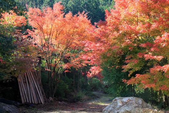紅葉探訪14 京見峠から杉坂_e0048413_18335161.jpg