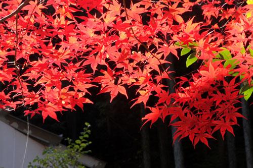 紅葉探訪14 京見峠から杉坂_e0048413_18341487.jpg