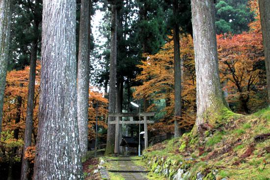 紅葉探訪14 京見峠から杉坂_e0048413_18344250.jpg
