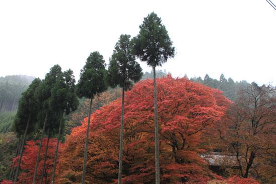 紅葉探訪14 京見峠から杉坂_e0048413_1835178.jpg