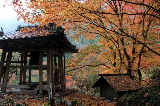 紅葉探訪14 京見峠から杉坂_e0048413_18361022.jpg