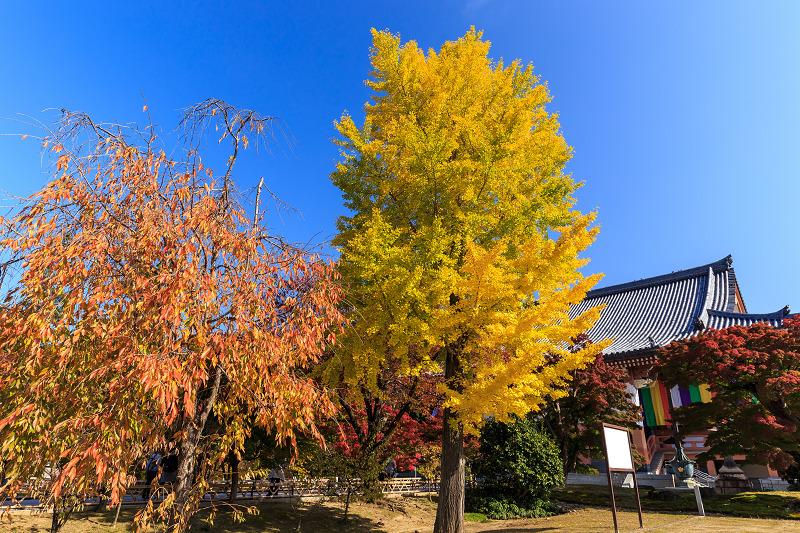 京都の紅葉2016 染まる智積院_f0155048_2275444.jpg