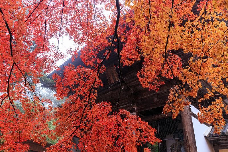 京都の紅葉2016 神護寺秋景色_f0155048_2372133.jpg