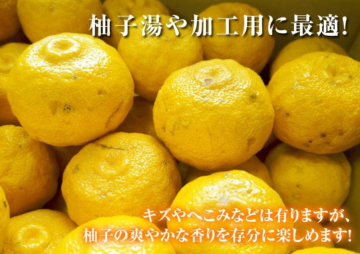 冬至の「柚子風呂」用柚子(ゆず)ご予約承り中!数量限定につき、お急ぎください!_a0254656_16303017.jpg