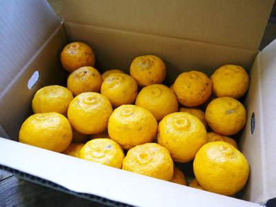 令和元年度の冬至の「柚子風呂」用柚子(ゆず)ご予約承り中!数量限定につき、お急ぎください!_a0254656_16472652.jpg