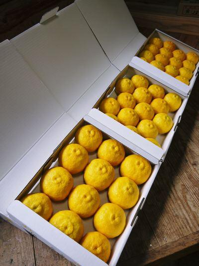 令和元年度の冬至の「柚子風呂」用柚子(ゆず)ご予約承り中!数量限定につき、お急ぎください!_a0254656_1658317.jpg