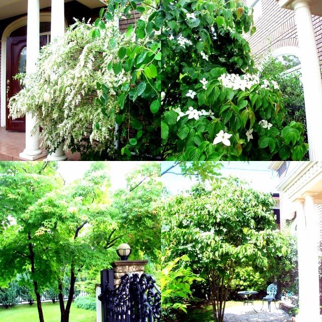 初夏の庭_a0092659_19001991.jpg