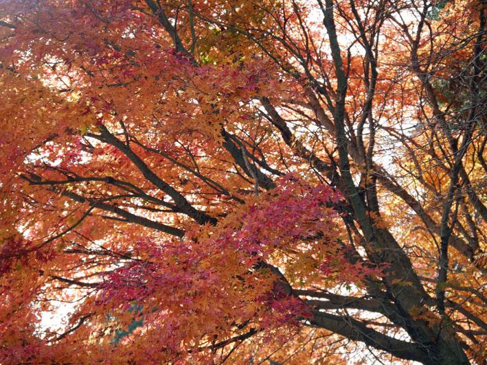 「森林探訪会」に参加、深秋の丹沢の紅葉を満喫11・20_c0014967_21303559.jpg