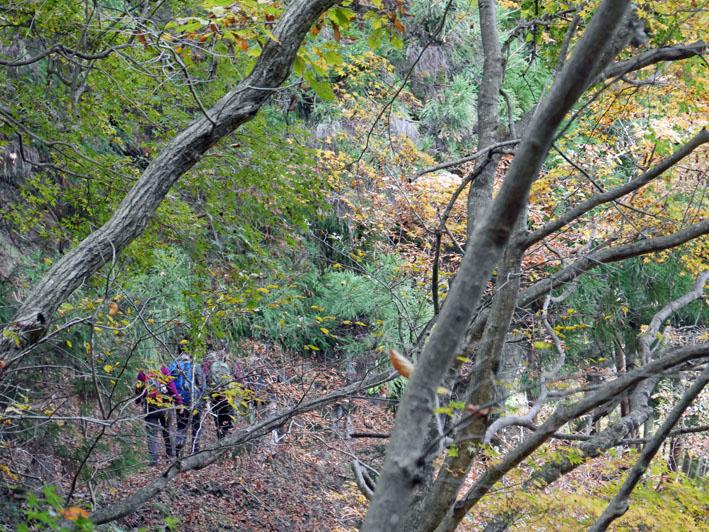 「森林探訪会」に参加、深秋の丹沢の紅葉を満喫11・20_c0014967_21305220.jpg