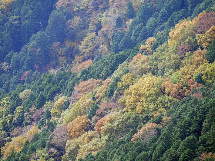「森林探訪会」に参加、深秋の丹沢の紅葉を満喫11・20_c0014967_213139.jpg