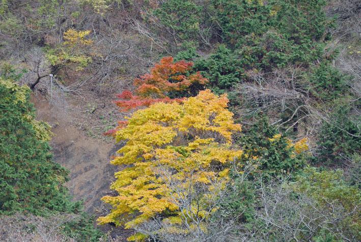 「森林探訪会」に参加、深秋の丹沢の紅葉を満喫11・20_c0014967_21314161.jpg