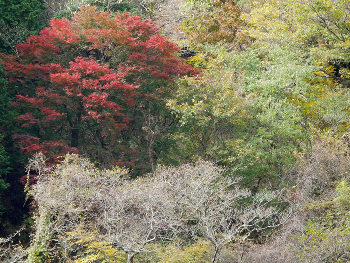 「森林探訪会」に参加、深秋の丹沢の紅葉を満喫11・20_c0014967_21315279.jpg