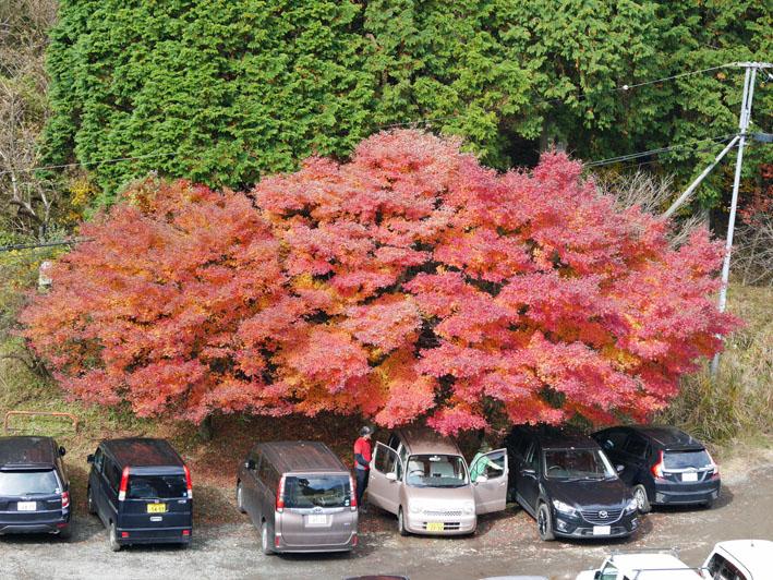 「森林探訪会」に参加、深秋の丹沢の紅葉を満喫11・20_c0014967_21321368.jpg