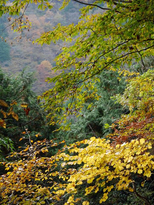 「森林探訪会」に参加、深秋の丹沢の紅葉を満喫11・20_c0014967_21322388.jpg
