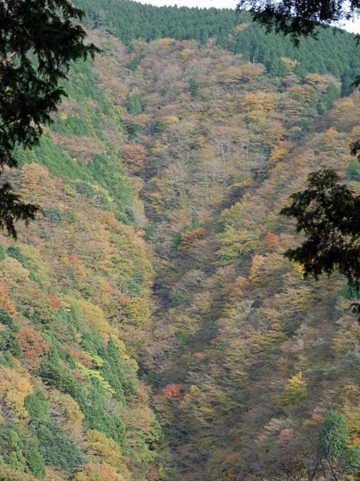 「森林探訪会」に参加、深秋の丹沢の紅葉を満喫11・20_c0014967_21323284.jpg