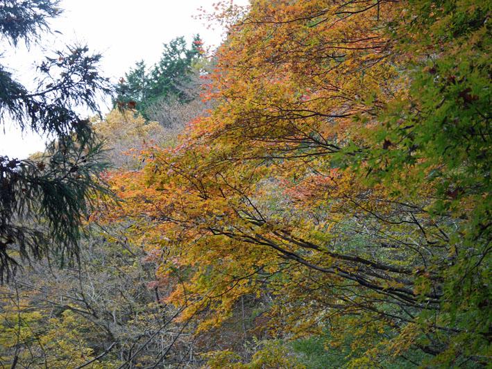 「森林探訪会」に参加、深秋の丹沢の紅葉を満喫11・20_c0014967_2132363.jpg
