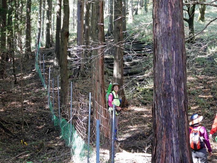 「森林探訪会」に参加、深秋の丹沢の紅葉を満喫11・20_c0014967_2132561.jpg
