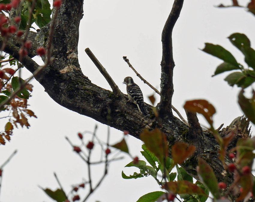 「森林探訪会」に参加、深秋の丹沢の紅葉を満喫11・20_c0014967_21331865.jpg
