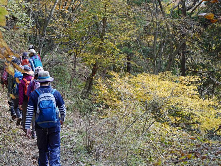 「森林探訪会」に参加、深秋の丹沢の紅葉を満喫11・20_c0014967_21412823.jpg
