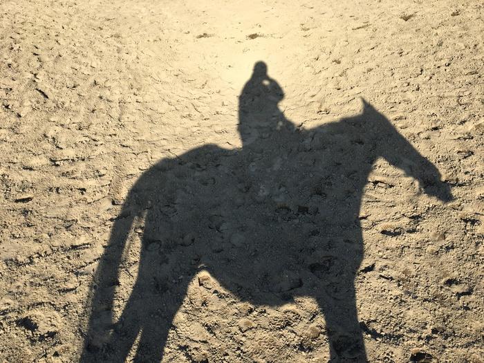 馬に乗りに行こう!_c0226202_22585615.jpg