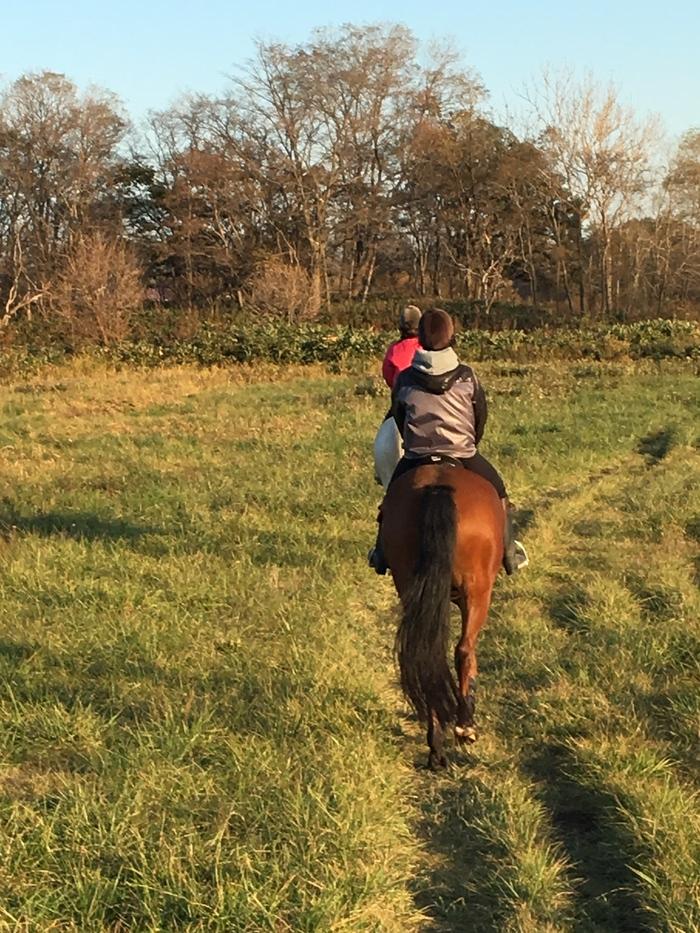 馬に乗りに行こう!_c0226202_2315161.jpg