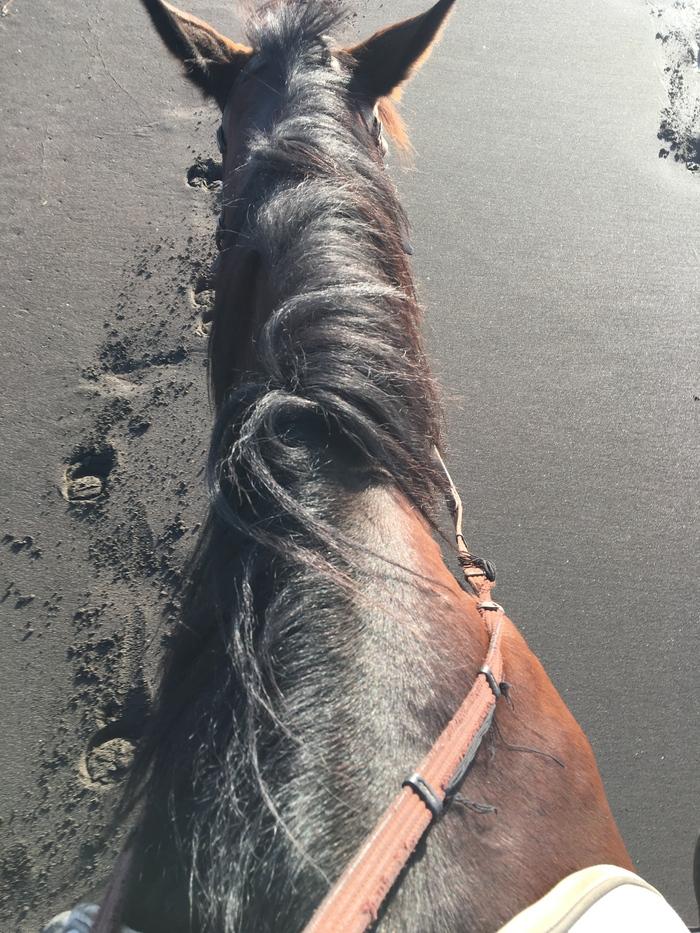 馬に乗りに行こう!_c0226202_23191070.jpg
