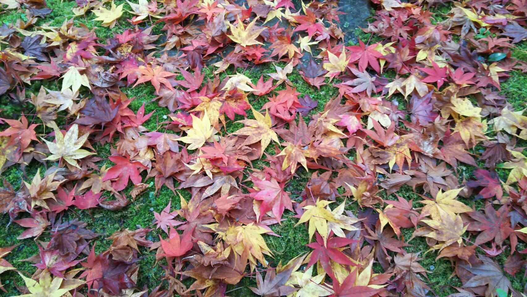 紅葉の京都に_f0316507_15262473.jpg
