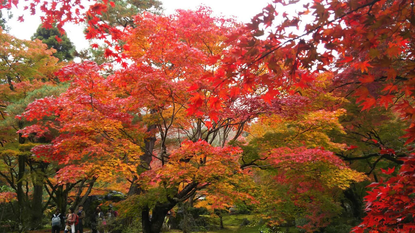 紅葉の京都に_f0316507_15264004.jpg